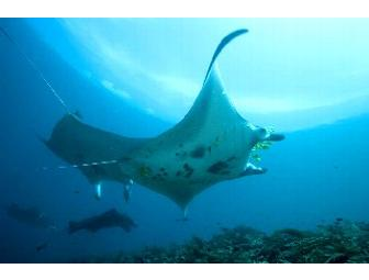 Komodo, Indonesia: Pindito Live-aboard (1 space) You Choose Dates-Subject to Availability