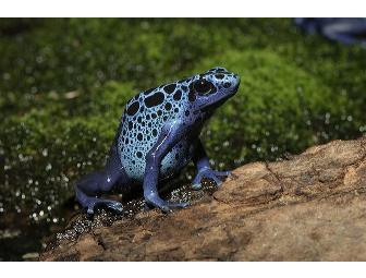 Behind-the-Scenes Tour of the National Zoo's Top Amphibian Conservation Projects