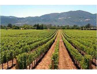 Sonoma Valley Wine Tastings