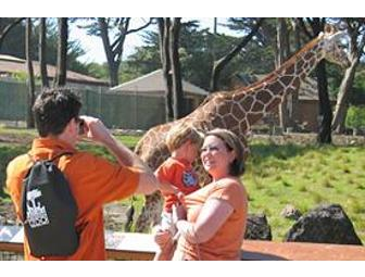 VIP Tour for 6 at San Francisco Zoo