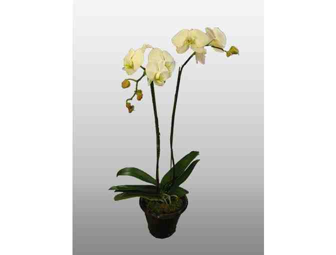 $150 certificate for an orchid