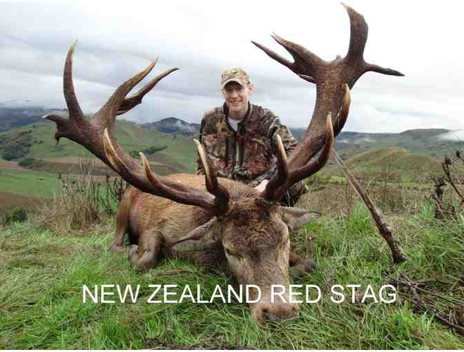 New Zealand Hunting Safari for Two Hunters