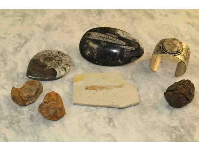 Fossil Collection - Photo 1