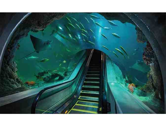 Odysea Aquarium in Scottsdale, AZ - 2 Tickets