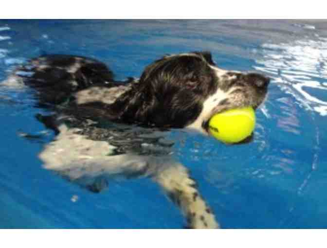 One Hour of Swimming for your Dog