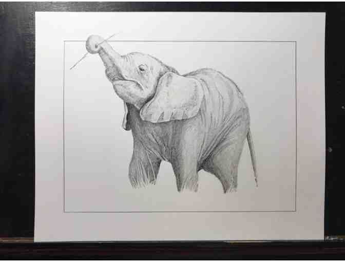 Baby Elephant Drawing - Original