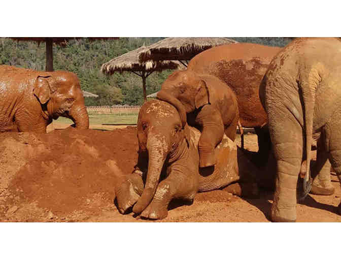 Volunteer Week for 2 at Elephant Nature Park - Experience Elephants!