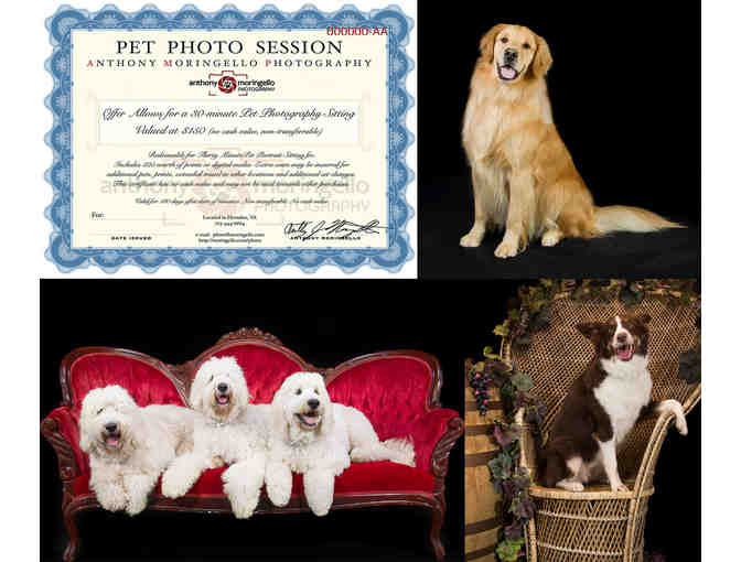 30 Minute Pet Mini Photo Session Plus Print credit