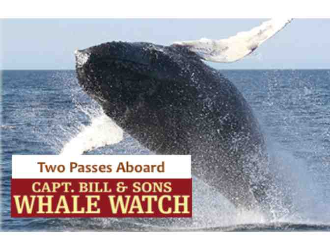 Cap'n Bill's Whale Watch & Lunch at Cafe Bishco