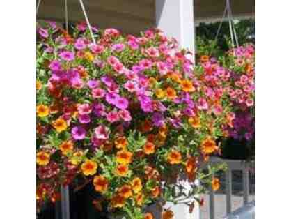 Beautiful Hanging Basket for your Home