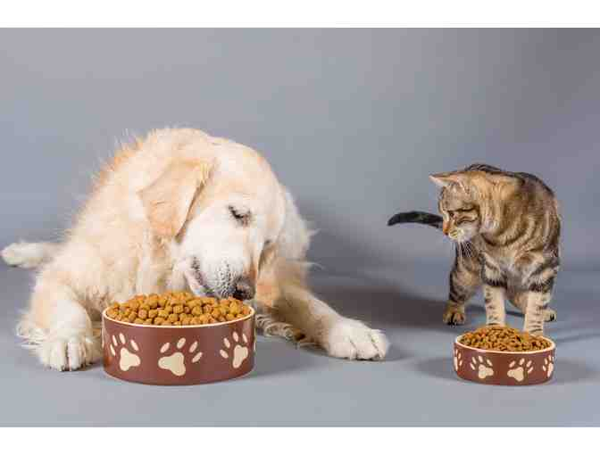 Feed a Shelter Pet for a Week - Photo 1