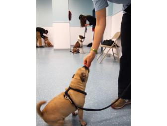 Doggedly Devoted Dog Training Package