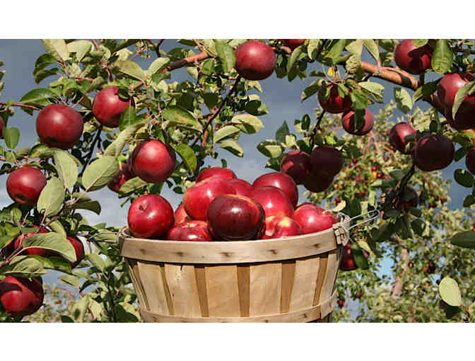 Apple Picking Package #1 - Brooksby Farm, Peabody MA - Photo 1