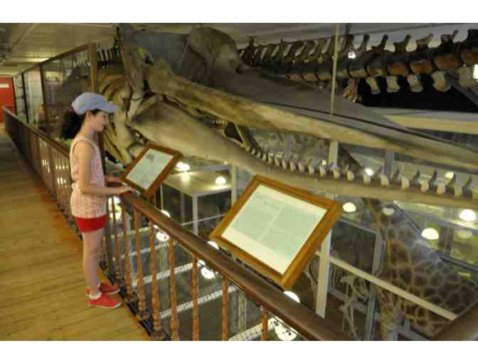 4 Passes to Harvard Museum of Natural History