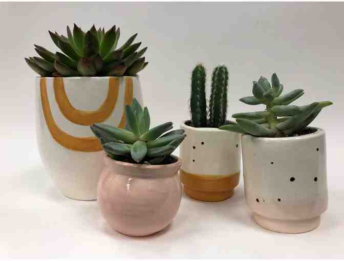 Luna Reese Ceramics - 4 Plants with Ceramic Planters