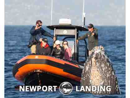 Newport Landing Whale Watching Trip - for 2