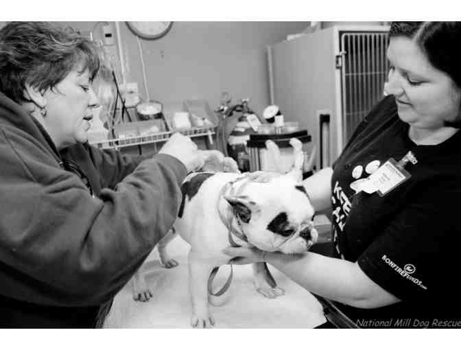 Fund A Need - Vaccinate & Microchip a Puppy Mill Survivor