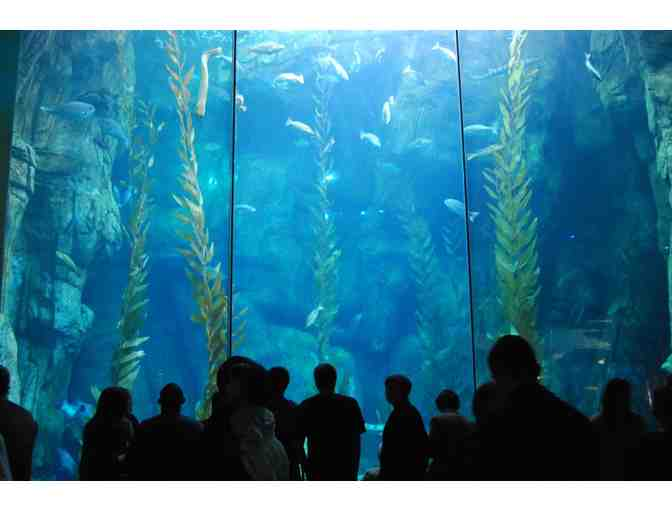 Aquarium of the Pacific for Two - Photo 6