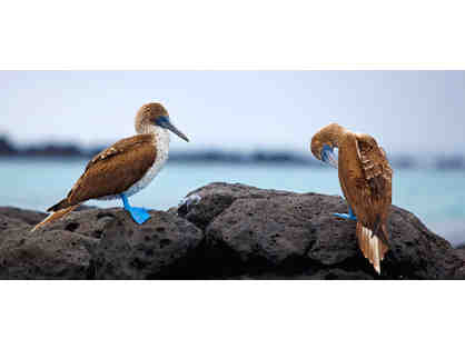 8 Night Galapagos Islands Expedition