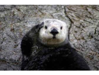 Sea Otter Experience