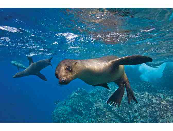 Galapagos Aboard National Geographic Endeavour
