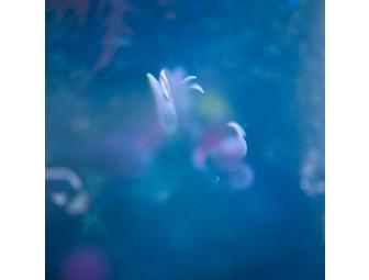 Tait Simpson  |  Flowers at the Hotel Delmano Photograph