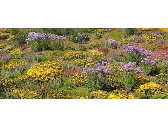 Tough Plants for Gardens & Green Roofs