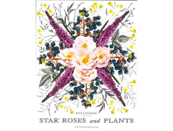 $500 Star Roses & Plants Gift Certificate