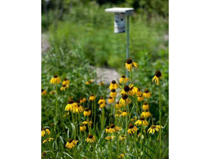 Plant a Meadow or a Native Landscape
