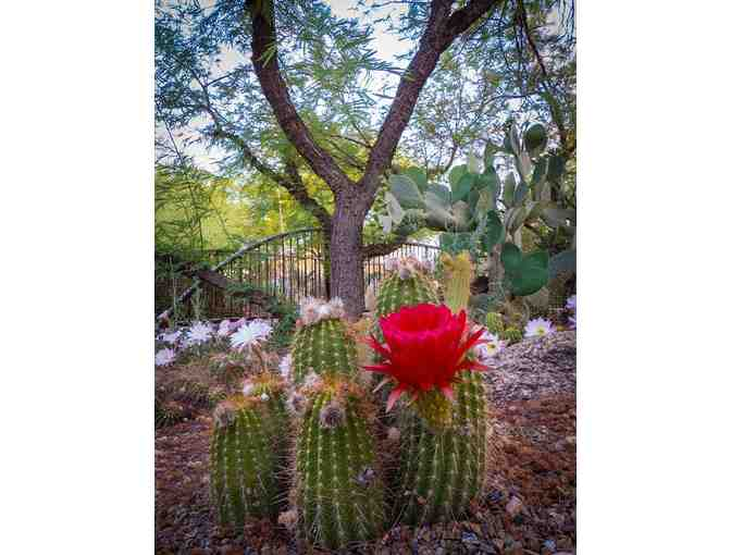 Desert Botanical Garden- Two General Admission Passes - Photo 2