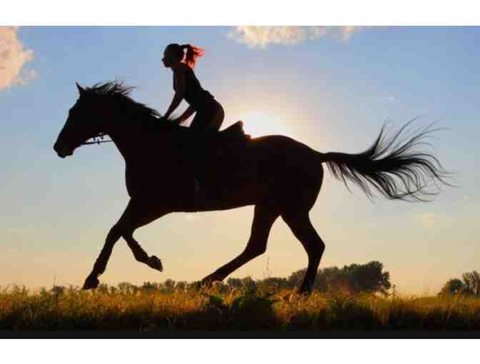 Series of 3 Riding Lessons