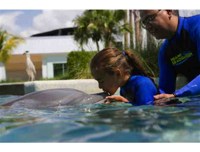 Up Close and Personal - Dolphin Odyssey for Two people with admission to Miami Seaquarium! - Photo 1