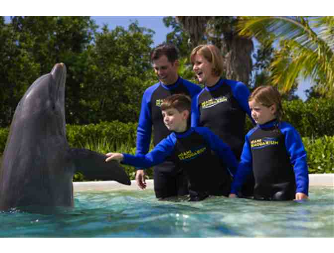 Up Close and Personal - Dolphin Odyssey for Two people with admission to Miami Seaquarium! - Photo 2