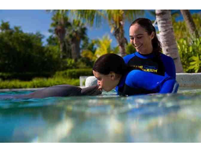 Up Close and Personal - Dolphin Odyssey for Two people with admission to Miami Seaquarium! - Photo 3