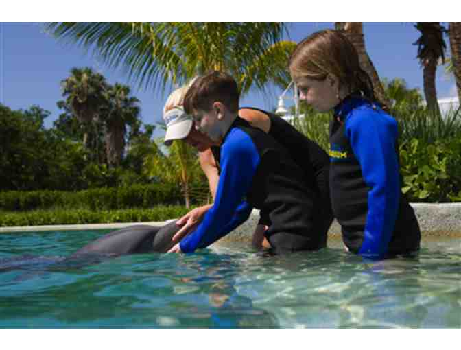 Up Close and Personal - Dolphin Odyssey for Two people with admission to Miami Seaquarium! - Photo 4