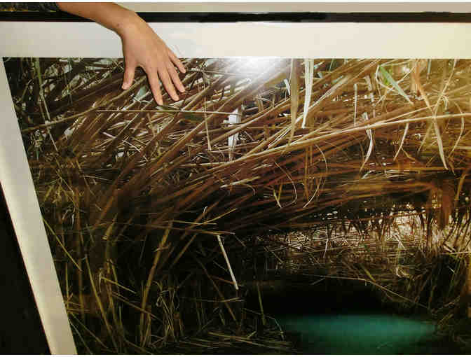 Ofer Wolberger mural size photograph 'Cleansing Pool'