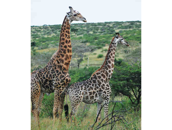 South African Photo Safari for Two at Zulu Nyala - Photo 6