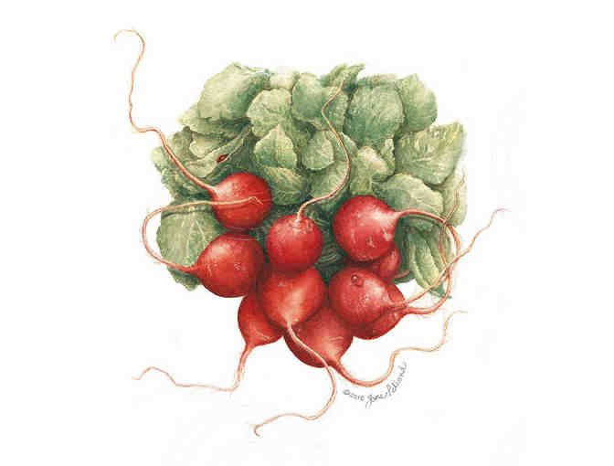 'Radishes' -  Lithograph by Jan Pelland