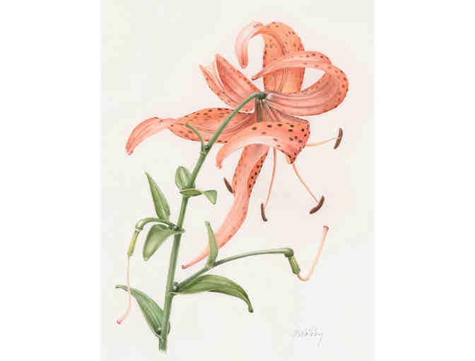 Tiger Lily by Janene Walkky