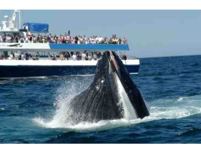 Whale of a Time - Whale Watch & Dinner at East Bay Grille