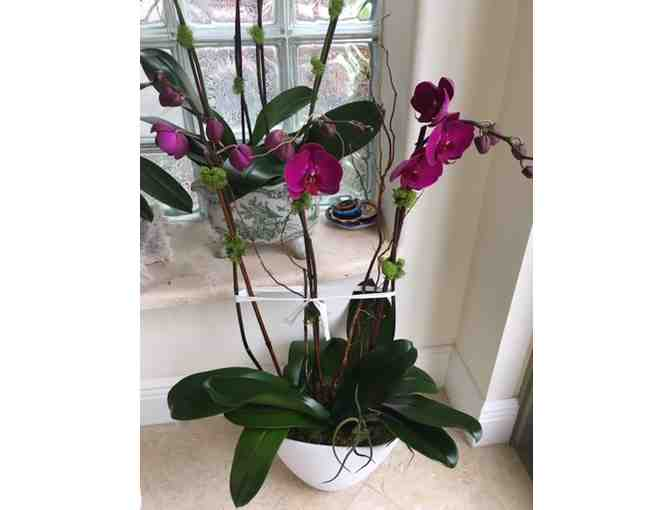 3 Orchid Arrangement with Delivery Near Jupiter, FL