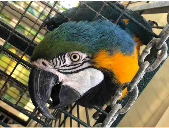 Tour of Local Aviaries