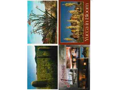 Arizona Postcard Lot