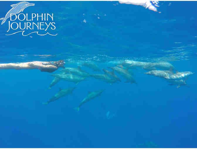 Dolphin Journeys: Swim with Dolphins Excursion for 1 person