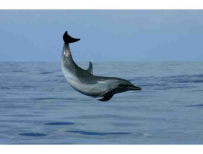 Gift Certificate for One Guest Aboard a Body Glove Deluxe Snorkel BBQ & Dolphin Watch - Photo 3