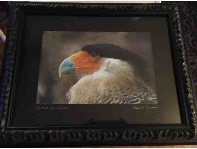 Framed Photo of Crested Caracara by Deborah Ferrance