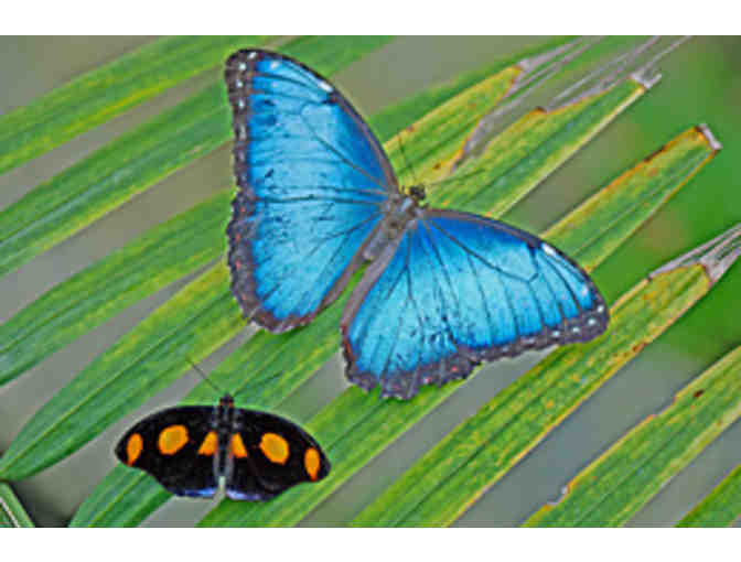 Butterfly Place - $35 gift certificate