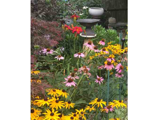 Perennial Plants from a Cambridge Garden
