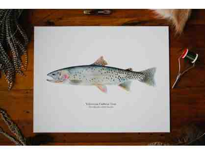 Yellowstone Cutthroat Trout Watercolor Fine Art Print