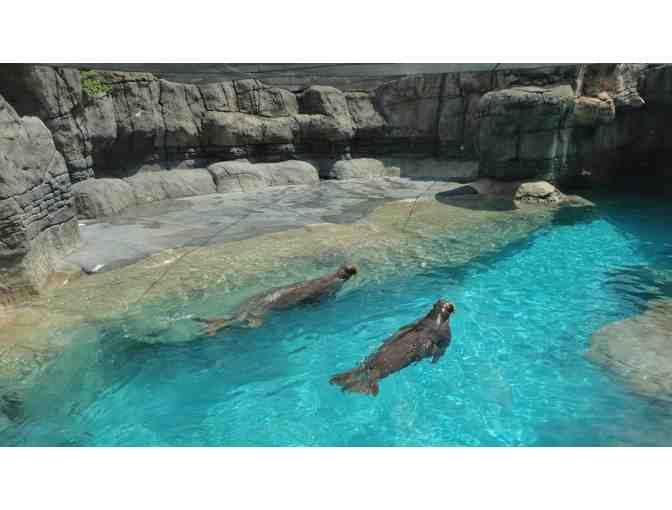 Behind the Scenes Tour of Pacific Walrus at Indianapolis Zoo